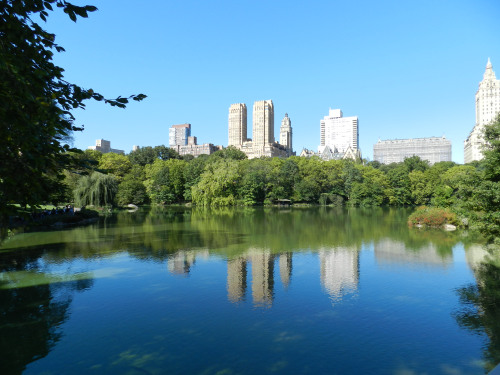 Central Park surrounded by luxury buildings