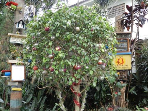 A árvore não me deixa mentir. É Natal todo dia na Adalbertolândia e o vô Adalberto é nosso Papai Noel