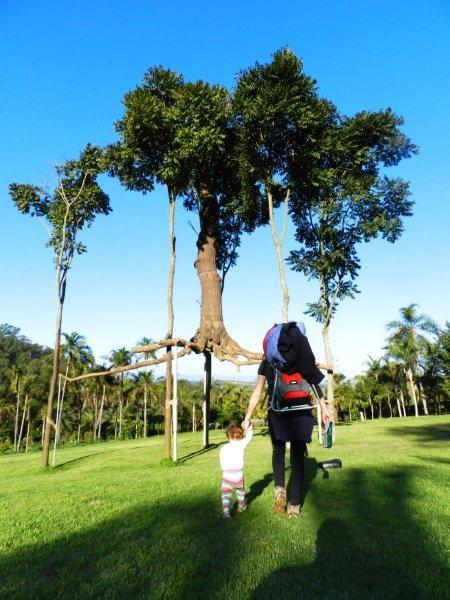 Árvore saindo para dar uma volta