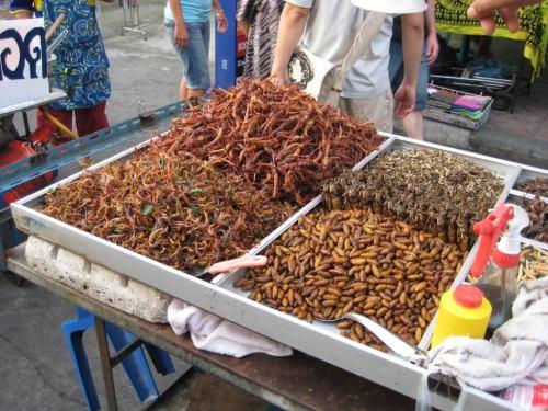 Escorpião ou barata?