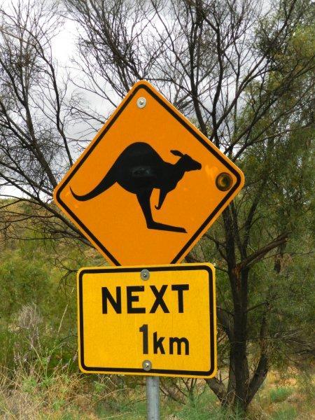 Não se assute com as placas. Não vimos um só canguru cruzando as estradas