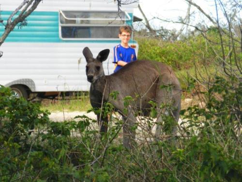 A curiosidade para ver o canguru não era só nossa