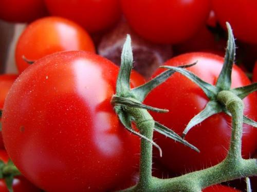 e comer estes tomates para o resto da vida?