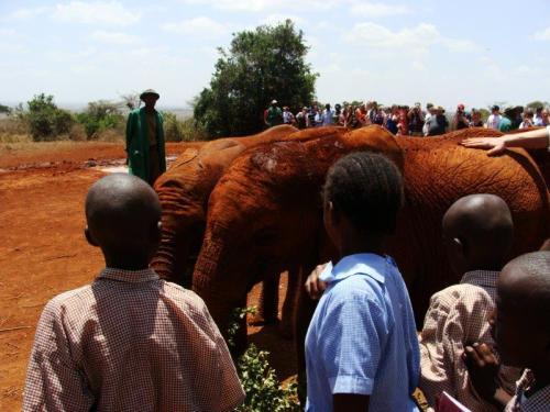 Crianças locais se divertindo com filhotes de elefantes