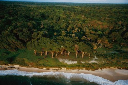 Selva e praia lado a lado (Foto de Michael Nichols)