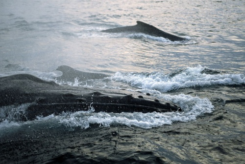Baleias mais de perto (Foto de Michael Nichols)