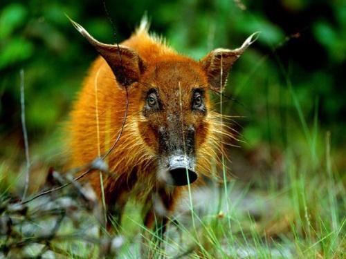 Mais vida selvagem (Foto de Michael Nichols)