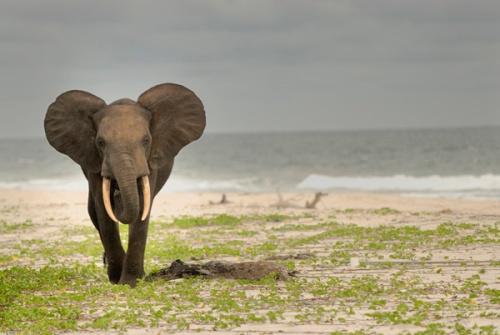 Elefantes também vem se refrescar (Foto de Michael Nichols)
