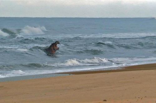 É surf ou não é? (Fonte: roomsuggestion.com)