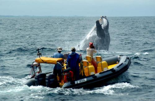 Baleias bem de perto (Fonte: dubaitoafrica.com)