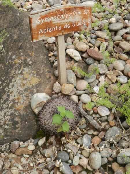 Até a flora tem bom humor
