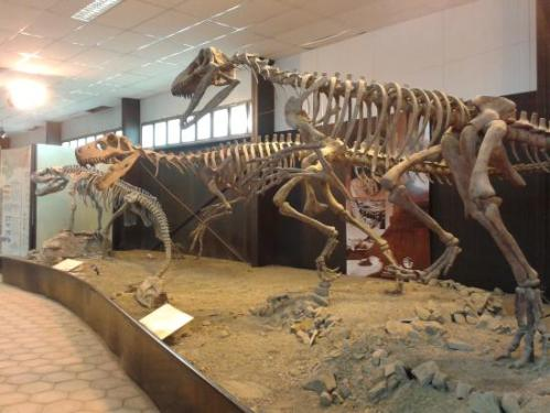 Esqueletos de dinossauro do museu