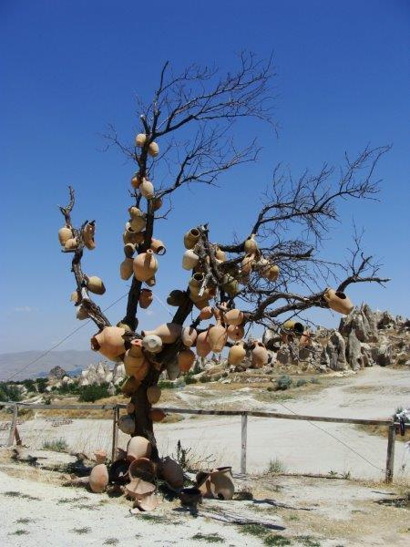 Potes que nascem em árvores só na Turquia