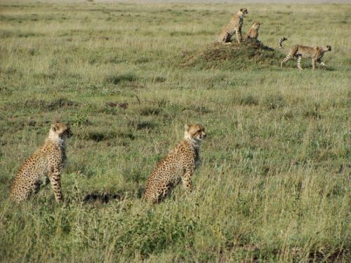 Grupo reunido pouco antes da caçada