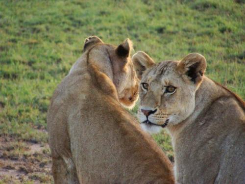e com aprendizes de leão