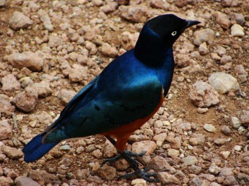 Pássaros também são avistados