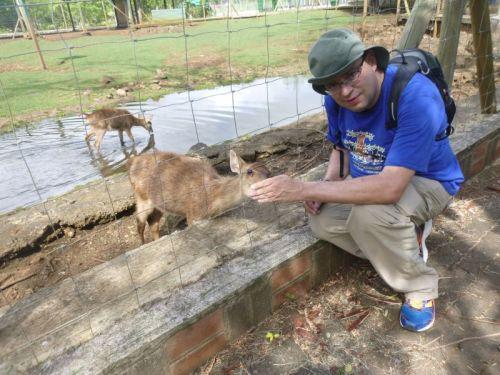 Alimentando os animais