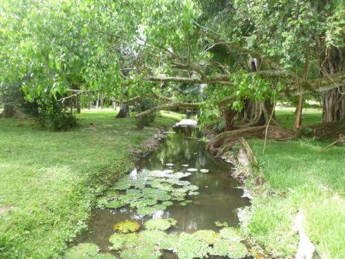 Bela vegetação dos Jardins Reais de Paamplehouse