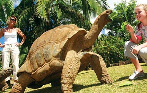 Tartarugas gigantes soltas ao seu redor (foto do site www.mauritius-tourist-guide.mu)