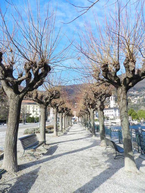Árvores desfolhadas na beira do lago em Cernobbio