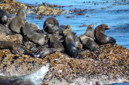 Leões marinhos (foto do site um pouquinho de cada lugar