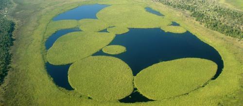 Área alagada como nosso pantanal